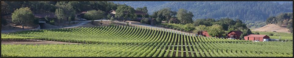 napa valley private wine tours 1
