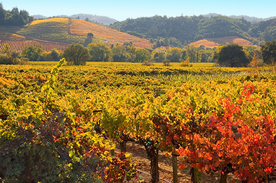 Dry Creek Valley Wine Tours