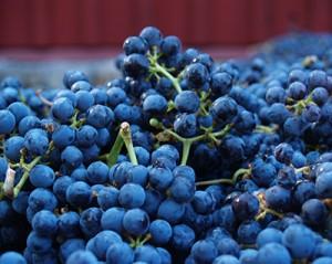 San Francisco Private Wine Tasting Tours