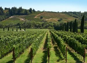 sonoma wine tours 1