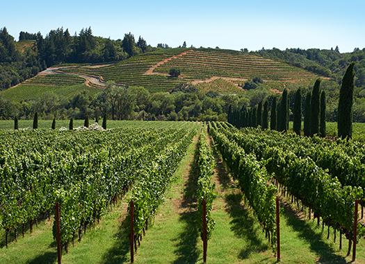 Sonoma Luxury Limousine Wine Tours
