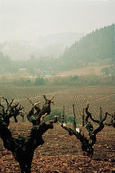 old vine zinfandel dry creek vineyards