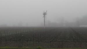 morning fog los carneros