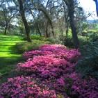 Napa Valley Winery Gardens