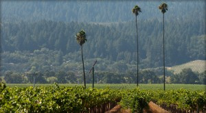 Duckhorn Vineyards Three Palms Vineyard St Helena