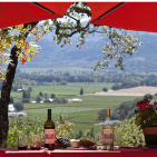 Picnic spots at Napa Valley Wineries