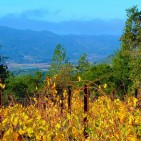 Howell Mountain Wineries