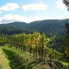 Napa Valley Winery Tours – Part V