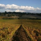 Napa Valley Winery Tours – Part VIII