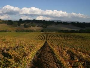 hyde vineyards carneros