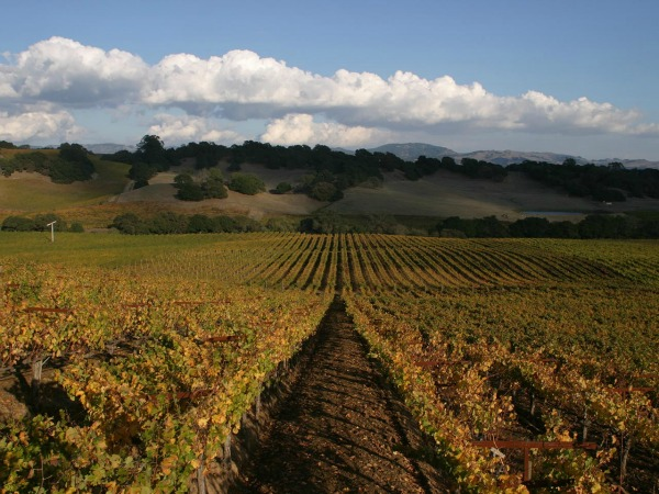 Alexander Valley Winery Tours