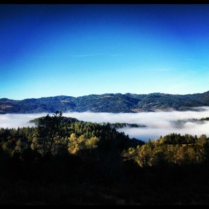 Above Fog Line Madera Vineyards Howell Mountain