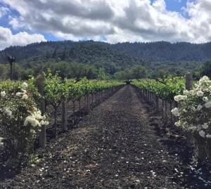 Oakville Estate Vineyard Paradigm Winery