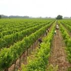 Napa Valley Wine Tasting Educational Series – Part V