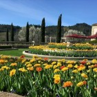 Corporate Wine Tours in Wine Country