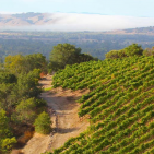 October Sonoma Events
