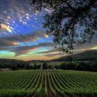 Wine Tasting at Napa Valley Wineries