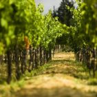 Sonoma Wineries for Wine Tasting