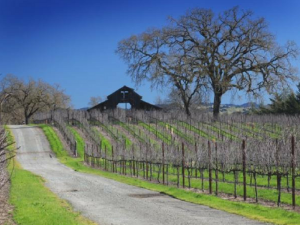Winter Wineland Sonoma