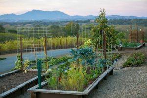 Gardens Arista Winery Sonoma