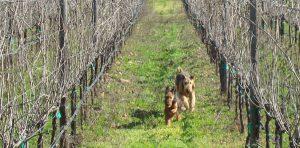 Enjoy Dutch Henry dogs Pawsport