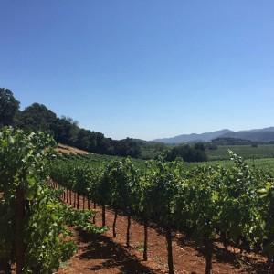 575 OVX Vineyard Gargiulo Vineyards