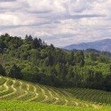 Top Spring Mountain Wineries in the Napa Valley