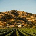Top Stags Leap District Tasting Rooms and Wineries to Visit