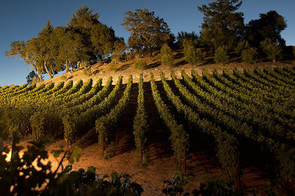Merryvale Winery St Helena Napa Valley