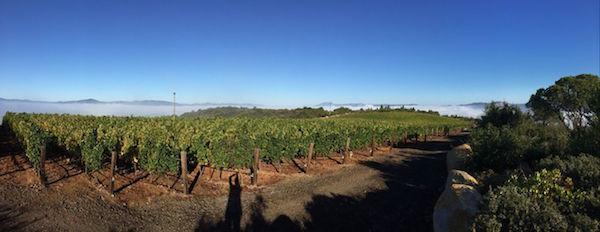 BRAND wine Napa Valley